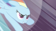 Rainbow Dash Appreciation Society